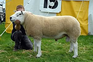 NSA Wales and Borders Ram Sale