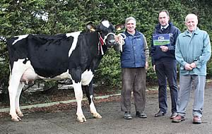 Champion Leads Moira Holstein Entry At 4 100gns