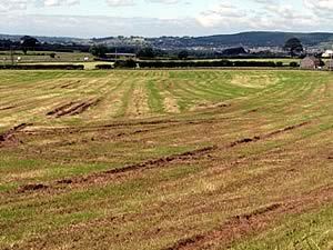damaged grassland