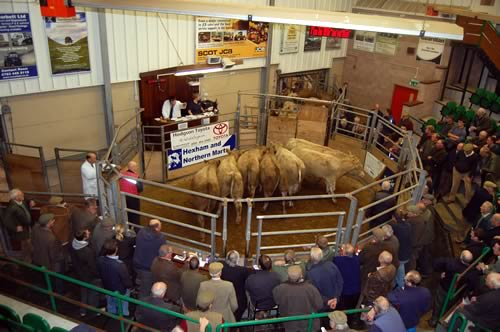 Hexham Auction Mart Store Cattle Amp Sheep Sale
