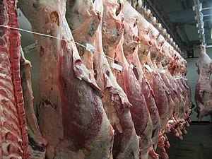 http://www.stackyard.com/news/images/generic/meat/beef_carcases.jpg